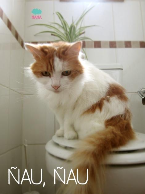 gato-mamaniaca